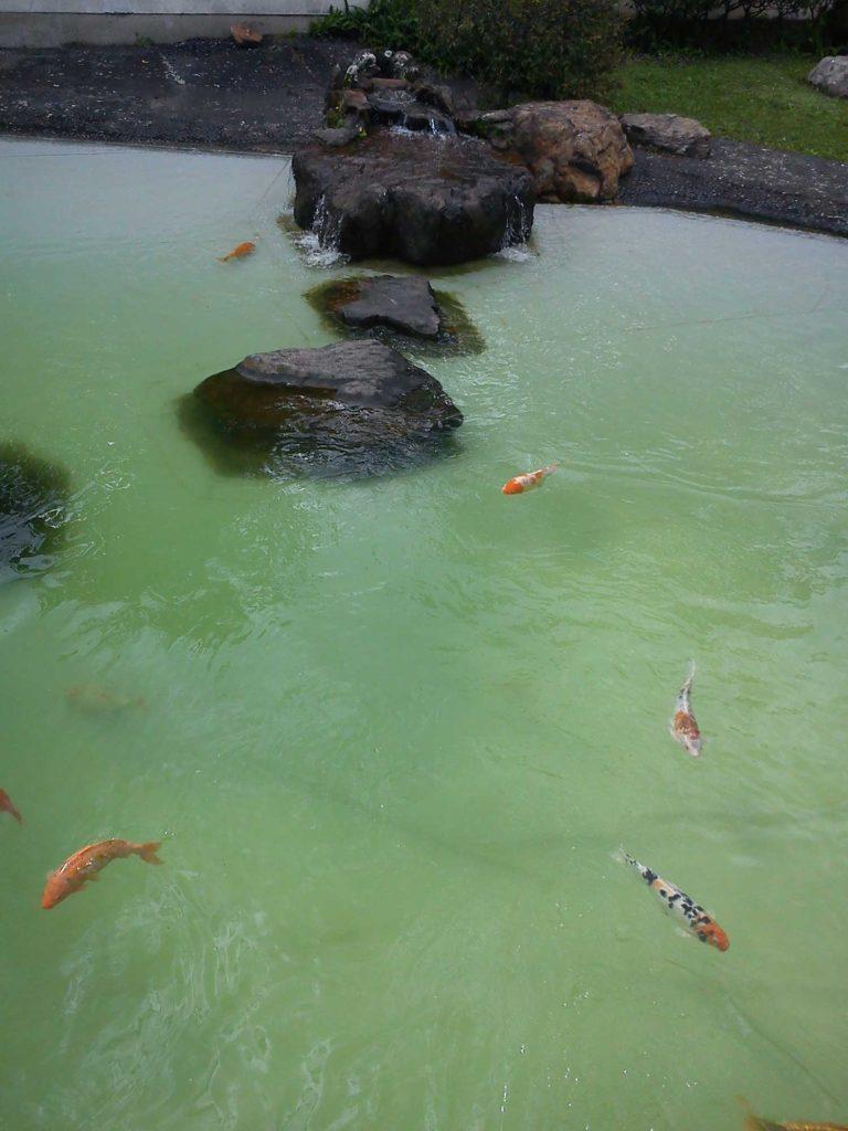 Pavilhão Japonês – Ibirapuera - Parques em SP