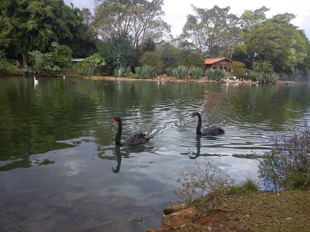 Lago do Parque Ibirapuera - Parques em SP