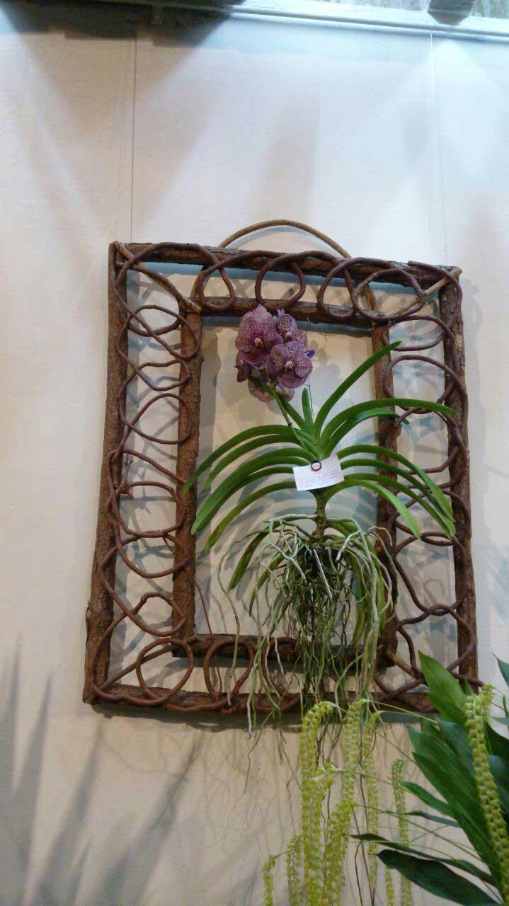 Exposição de Orquídeas