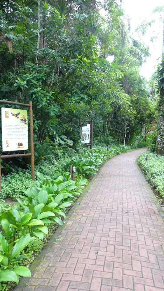 Caminho para chegar a Praia de Iporanga