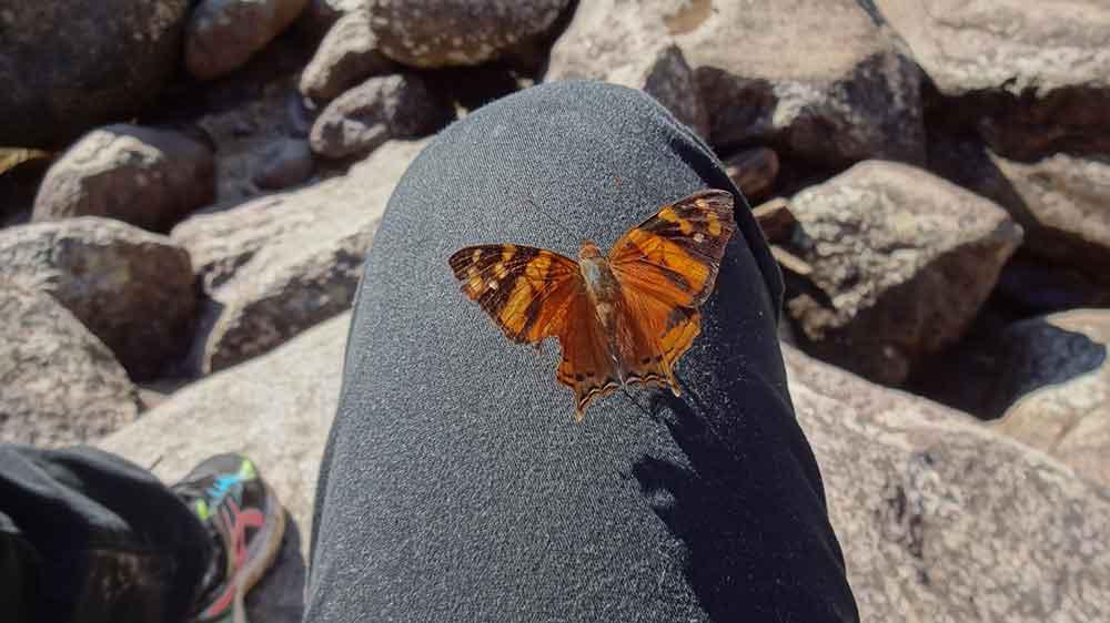 Borboleta Pousada em minha perna - Parque Nacional de Itatiaia