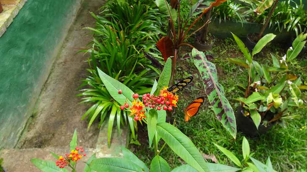 Borboletário Flores que Voam - Campos do Jordão