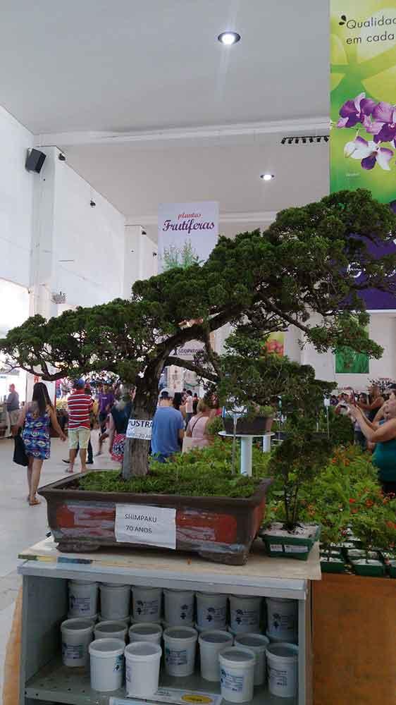Expoflora Holambra - Bonsai