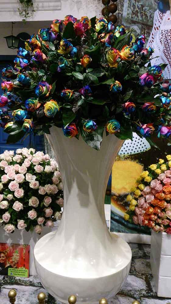 Rosas Coloridas Pétala a Pétala