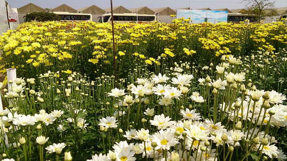 Fazenda de Cultivo de Flores - Holambra