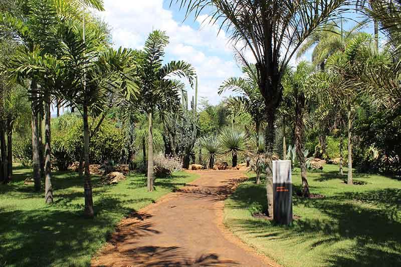 Jardim Desértico - Setor Laranja - Museu de Arte Contemporânea