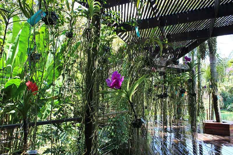 Largo das Orquídeas - Museu de Arte Contemporânea
