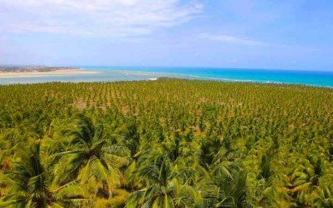 Vista Mirante do Gunga - Passeios em Alagoas